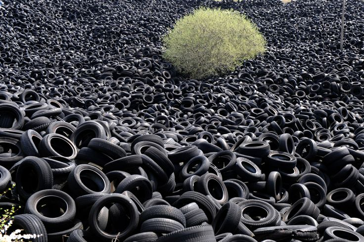 Eric Cabanis // April 16, 2013. A tree is seen among several thousands of tons of used tires piled in a ten-hectare installation for recycling in Lachapelle-Auzac,