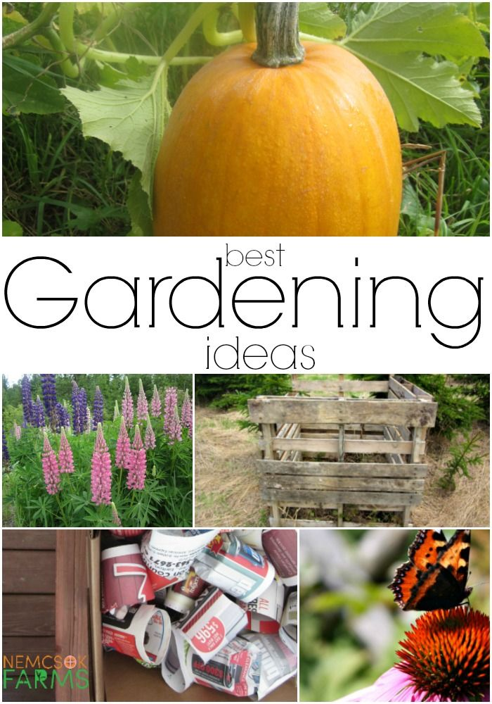 best gardening ideas