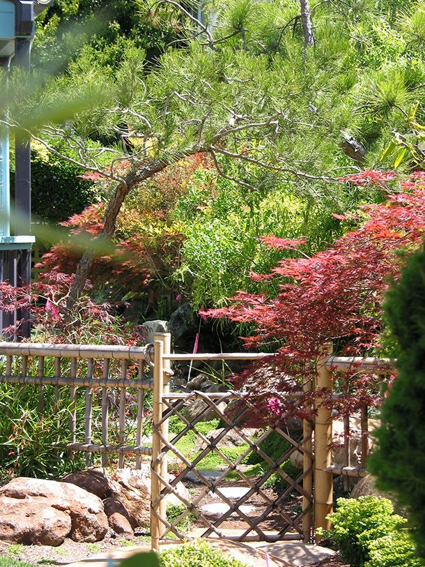 17 Best Images About Pond On Pinterest Garden Fencing Cheap Fence Ideas And Chain Link Fencing