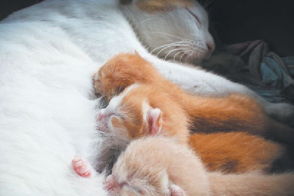 New Study Says We Should Wait To Wean Kittens Newborn Kittens Cat Facts Raising Kittens
