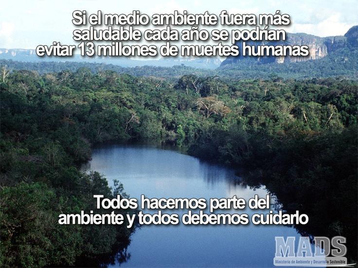 Todos somos parte del ambiente