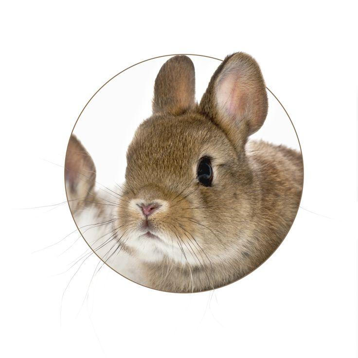 Cómo hacer un traje de conejo de Pascua | eHow en Español