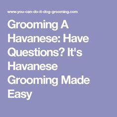 Grooming A Havanese: Have Questions? It's Havanese Grooming Made Easy