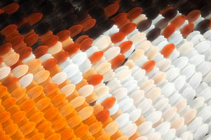 Gorgeous Macro Photographs of Butterfly and Moth Wings by Linden Gledhill