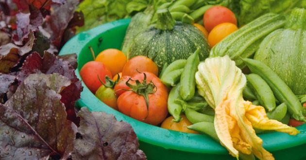 Att odla grönsaker är nyttigt både för kropp och själ | Sporthälsa