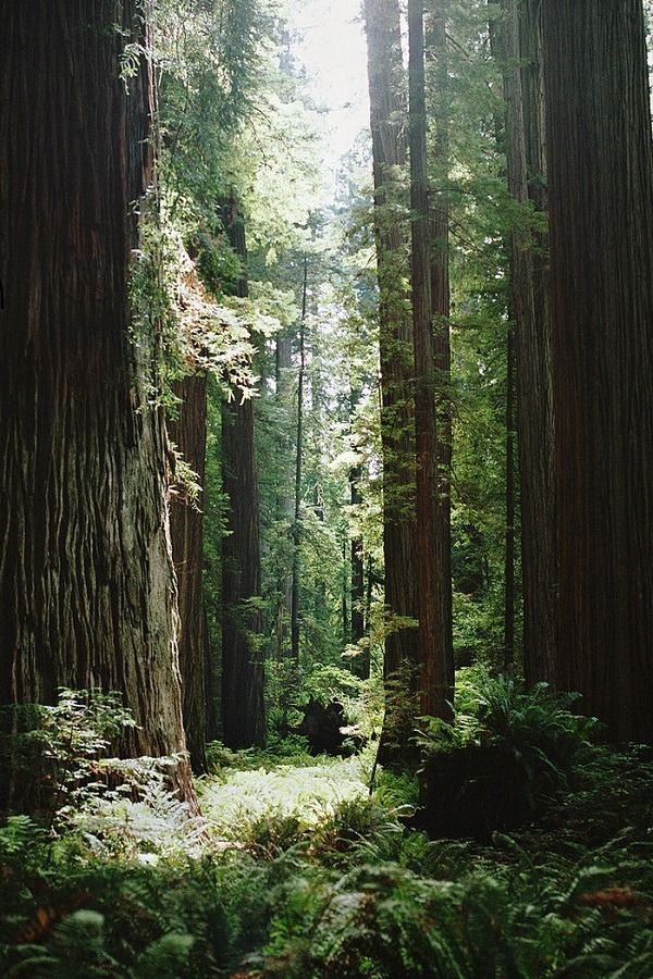 Desvre Nature Photography Beautiful Nature Tree Forest