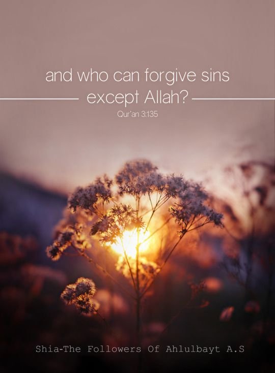❝ And who can forgive sins except Allah? ❞ ~ Quran 3:135 ~