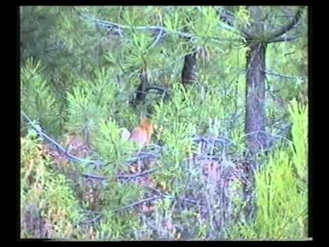 Blog que inclúe imaxes e videos de natureza.