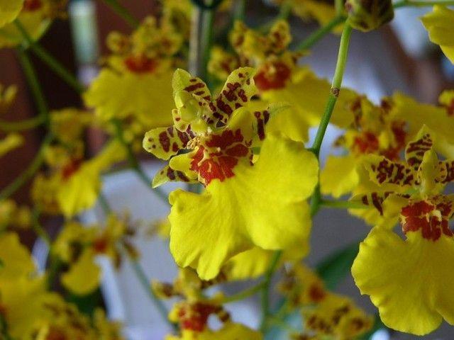 149 best images about orquideas de mi jard n on pinterest for Jardines de orquideas