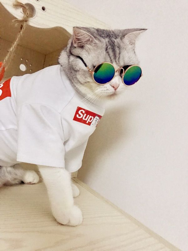 Http Buypetya Co Goods Supreme Pet Owner Pairing Clothes 40026 Html 犬の服 ペアルック お揃いの服
