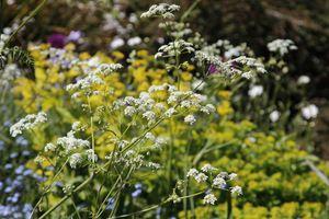 Ogrody jak obrazy impresjonistów, czyli kwiatowe fantazje cz. I - Ogrodowisko
