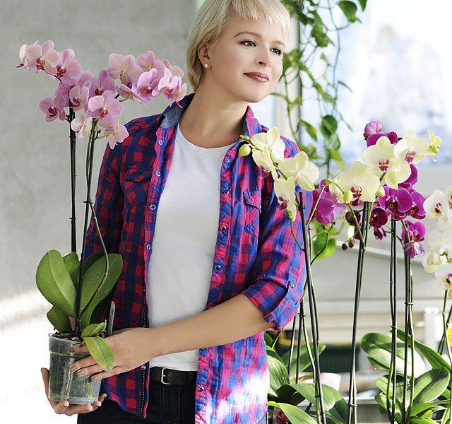 Hogyan keltsük életre tönkrement orchideánkat - Szabadidő - Kikapcsolódás - www.kiskegyed.hu