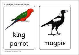 Australian birds flash cards (SB9693) - SparkleBox