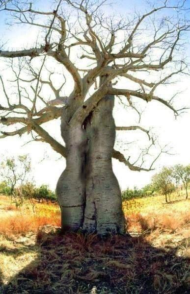 Tree hug...
