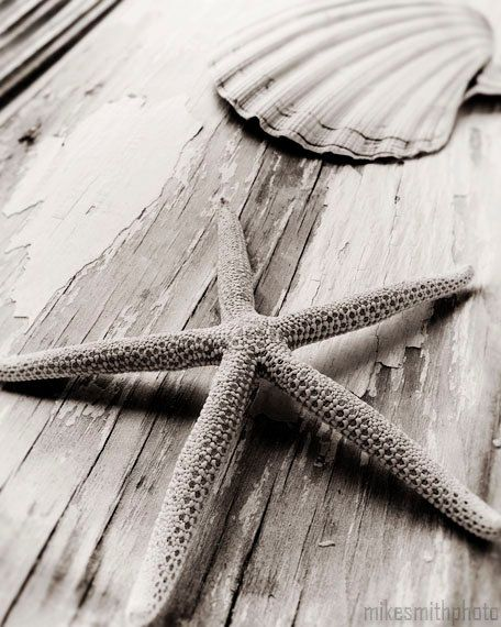 Nautical Decor Starfish and Sea Shell Black and White Nature Photo Macro Coastal Living Beach Cottage Home Shabby Chic Art Vintage Look. $25.00, via Etsy.