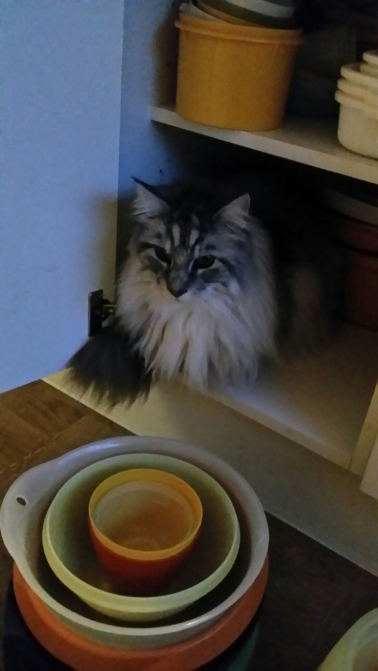 Keuken kasten schoonmaken  met Elmer als Hulp.