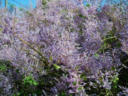 http://www.naturellementbien.fr / http://www.nbdirect.moncomptevdi.fr/?CodeCourtier=LUQB288: Naturellement bien . L ' aromathérapie . Le patcho...