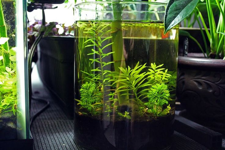 Starting a low maintenance aquatic vase or bowl planted for Tropical low maintenance plants