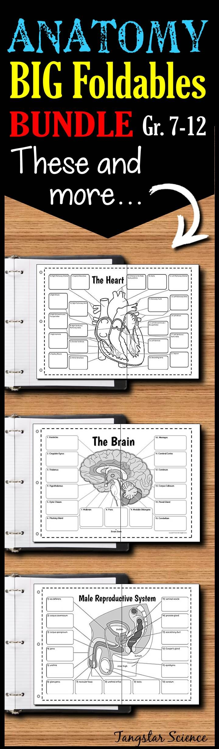 Massive Anatomy Foldables Bundle for Interactive Notebooks or Binders 82a6ed144c67d1560336b07ada2c1030  nursing care body systems