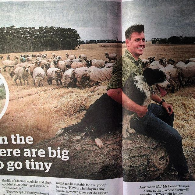 Today in Melbourne's Age newspaper photo by @simonwodwyer  #wheresthegreensheep
