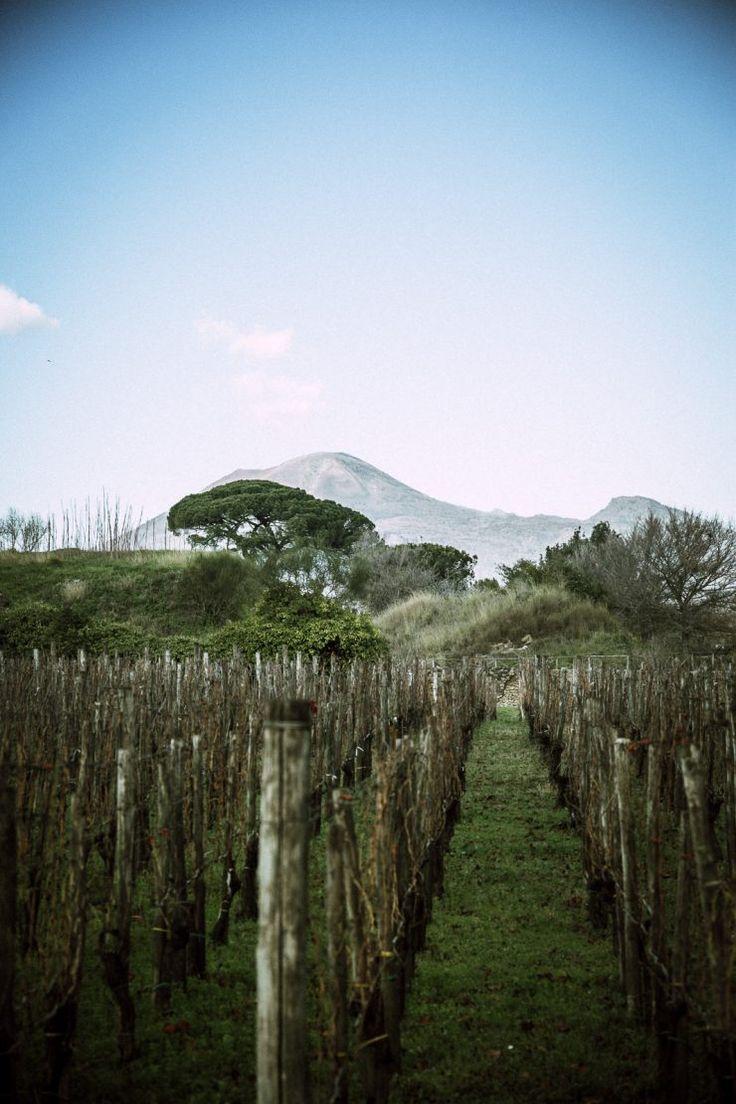 Vesuvius, Foro Boario | Pompeii: a travel guide by Thais FK | Due fili d'erba