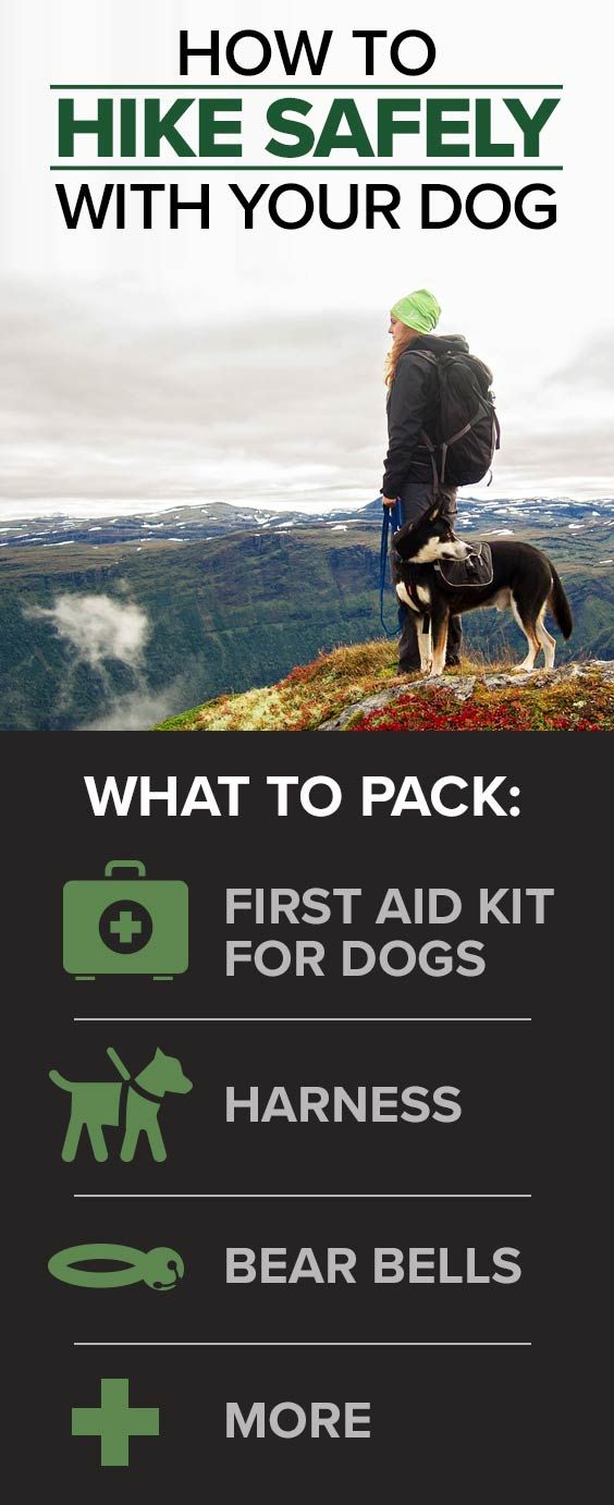 What are the essentials for safely hiking with your dog? A  first aid kit, harness and bear bells are a start. Find out more...
