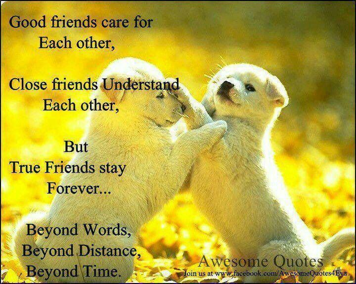 Good Morning Quotes For Friends: 78 Best Images About Friendship On Pinterest