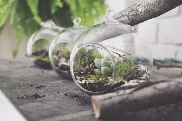 Stunning 21 Succulents DIY Inspiration https://architecturemagz.com/21-succulents-diy-inspiration/