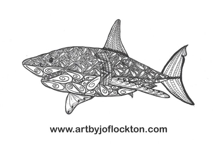 Leopard Shark Drawing | Division of Global Affairs