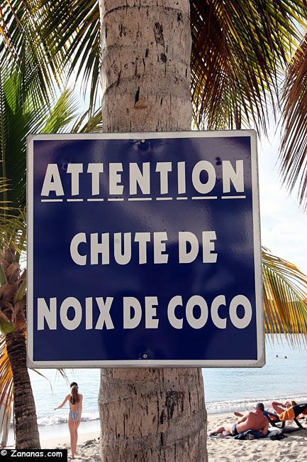 Sud Martinique : Attention chute de noix de coco.