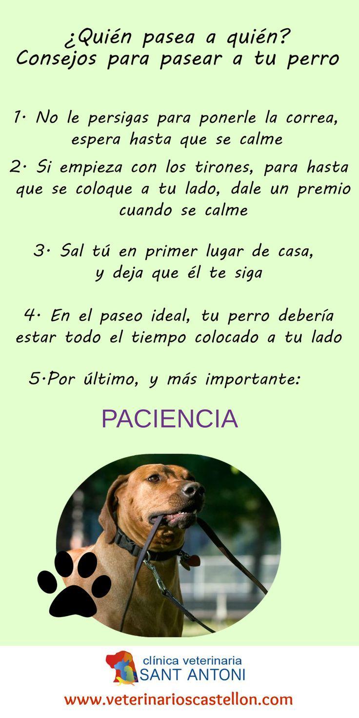 De paseo con nuestras mascotas. Consejos para pasear tu perro. #infografia #perro #mascota #pasearalperro http://veterinarioscastellon.com/noticias/