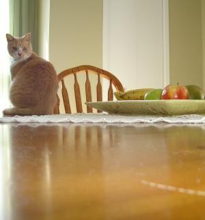 Cómo enseñar a un gato a no arañar los muebles