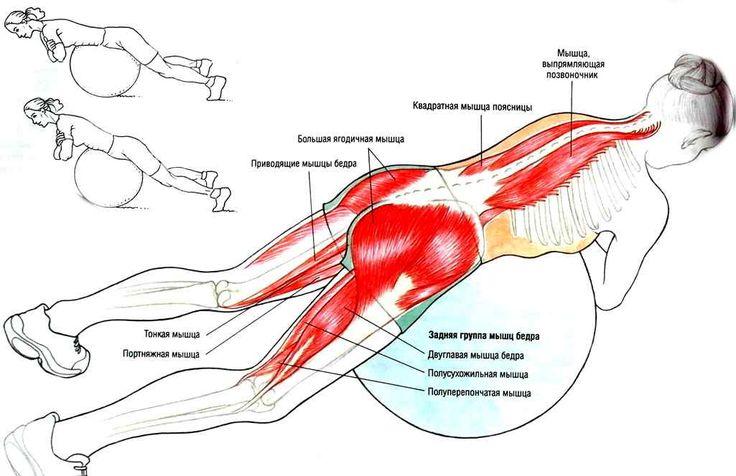 упражнение для спины способствуют укреплению мышц позвоночника, ягодиц и живота. Эти занятия благотворно сказываются на работе внутренних органов, улучшают самочувствие и сформировать правильную осанку.