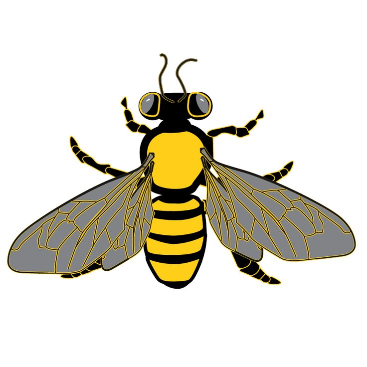 bee and honeycomb graphics