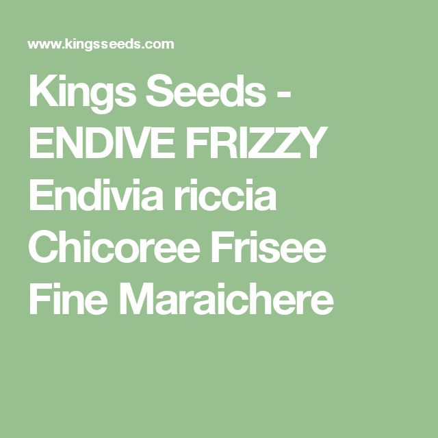 Kings Seeds - ENDIVE FRIZZY Endivia riccia Chicoree Frisee Fine Maraichere