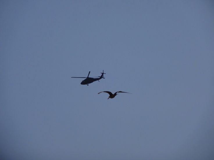 #flight #bird #blue #sky