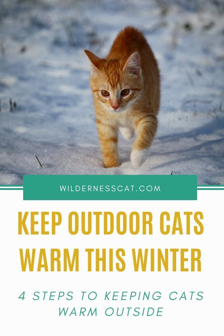 How To Keep Cats Warm Outside 4 Steps To Keep Outdoor Cats Warm This Winter Outdoor Cats Cats Winter Cat