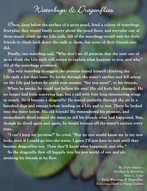 Water Bugs and Dragonflies Poem   Waterbugs and Dragonflies by ~Aine-Mistin on deviantART: