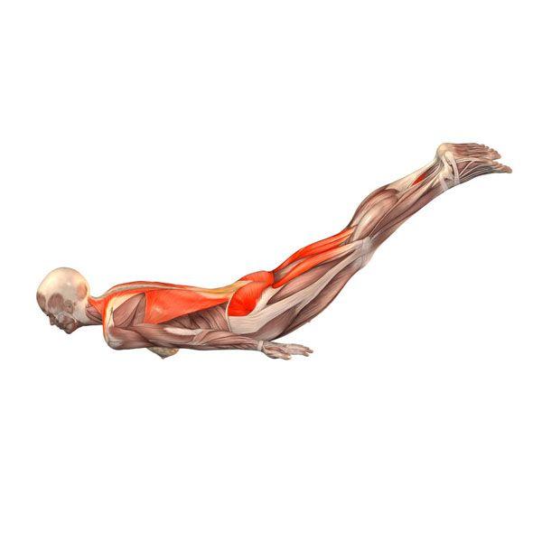 Locust pose - Salambhasana - Yoga Poses | YOGA.com