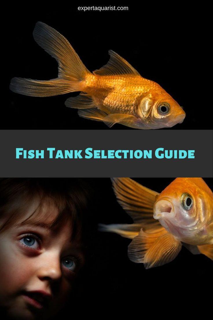 Choosing A Fish Tank Fish Tank Aquarium Systems Fish