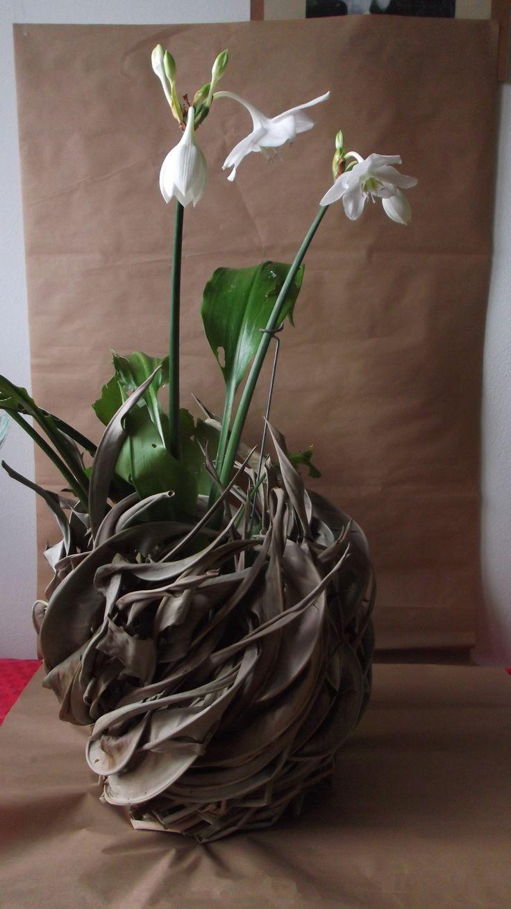 strelitzia leaves and eucarys
