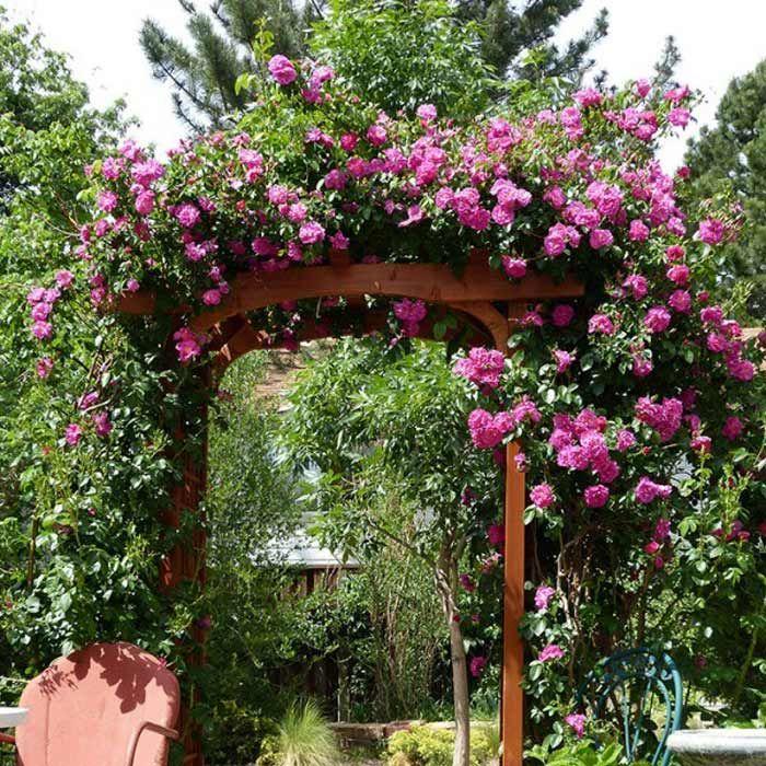 17 best images about beautiful garden ideas on pinterest gardens snowball and delphiniums - Rose cultivars garden ...