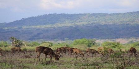 Taman Nasional Baluran, Wisata Alam di Jawa Timur Bernuansa Afrika