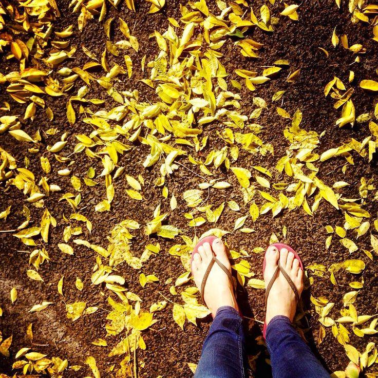 First cold snap of the year. Loving the colours though :). #FallLeaves #FallColors #Fall #Auckland #NewZealand #NZ #BeautifulDestinations #PureNZ #DestinationNZ #Aotearoa #MadeinNewZealand #NewZealandMade #FlipFlops #RedFlipFlops #Slippas #Havaianas #FallColours #AutumnLeaves #Autumn #AutumnColors #AutumnColours #Colorful #AutumnWeather