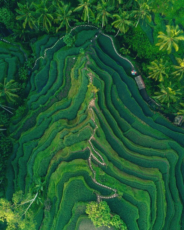 Dean Raphael Photographer Bali Aerial Photography Drone Nature Photography Photography Inspiration Nature