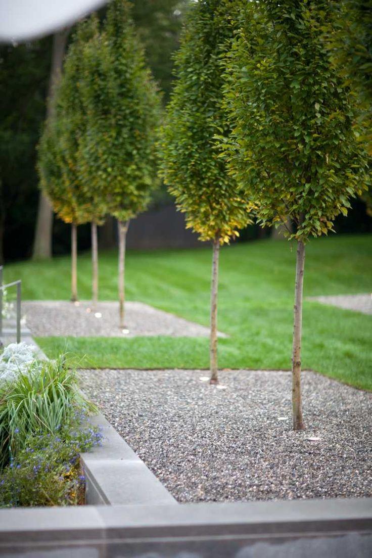 Jardin moderne avec du gravier d coratif galets et for Plante jardin moderne