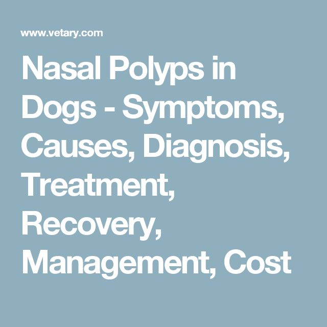 Nasal Polyps in Dogs - Symptoms, Causes, Diagnosis, Treatment, Recovery, Management, Cost