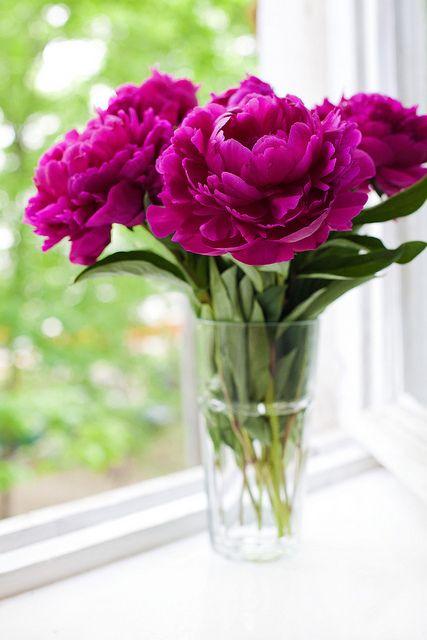 Pions #pion #flowers