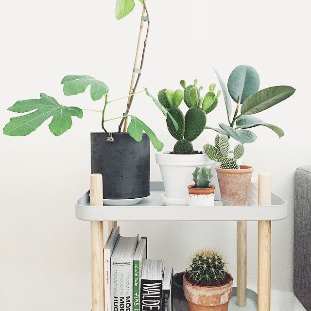 Block table decorated with beautiful plants! Photo by @howlinsandra