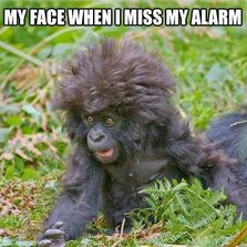 My face when I miss my alarm